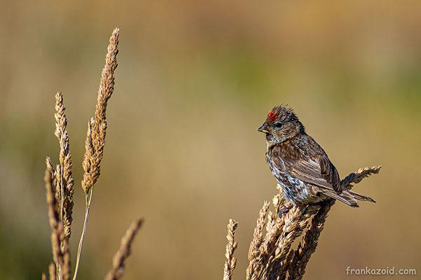Птичка на горе возле озеро Текапо